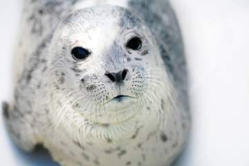 Pints, Pinnipeds and Rescue Stories: Special Edition After Hours @ Vancouver Aquarium